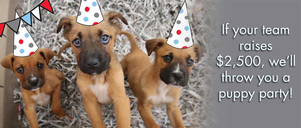 Earn your team a puppy party!